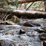 Colorado Hikes – Willowbrook