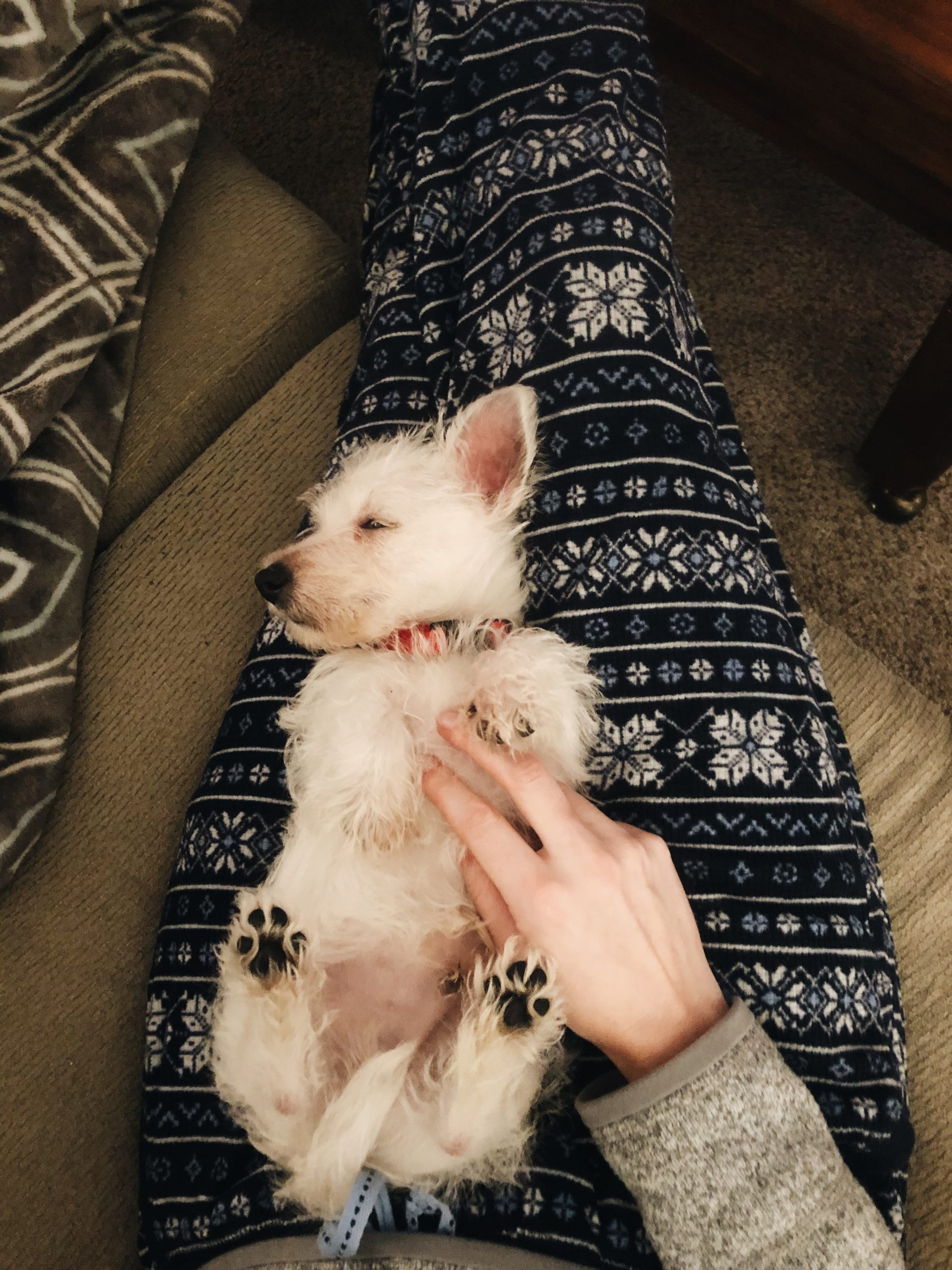 Sweet puppy cuddles with our little Mozi (8 weeks)