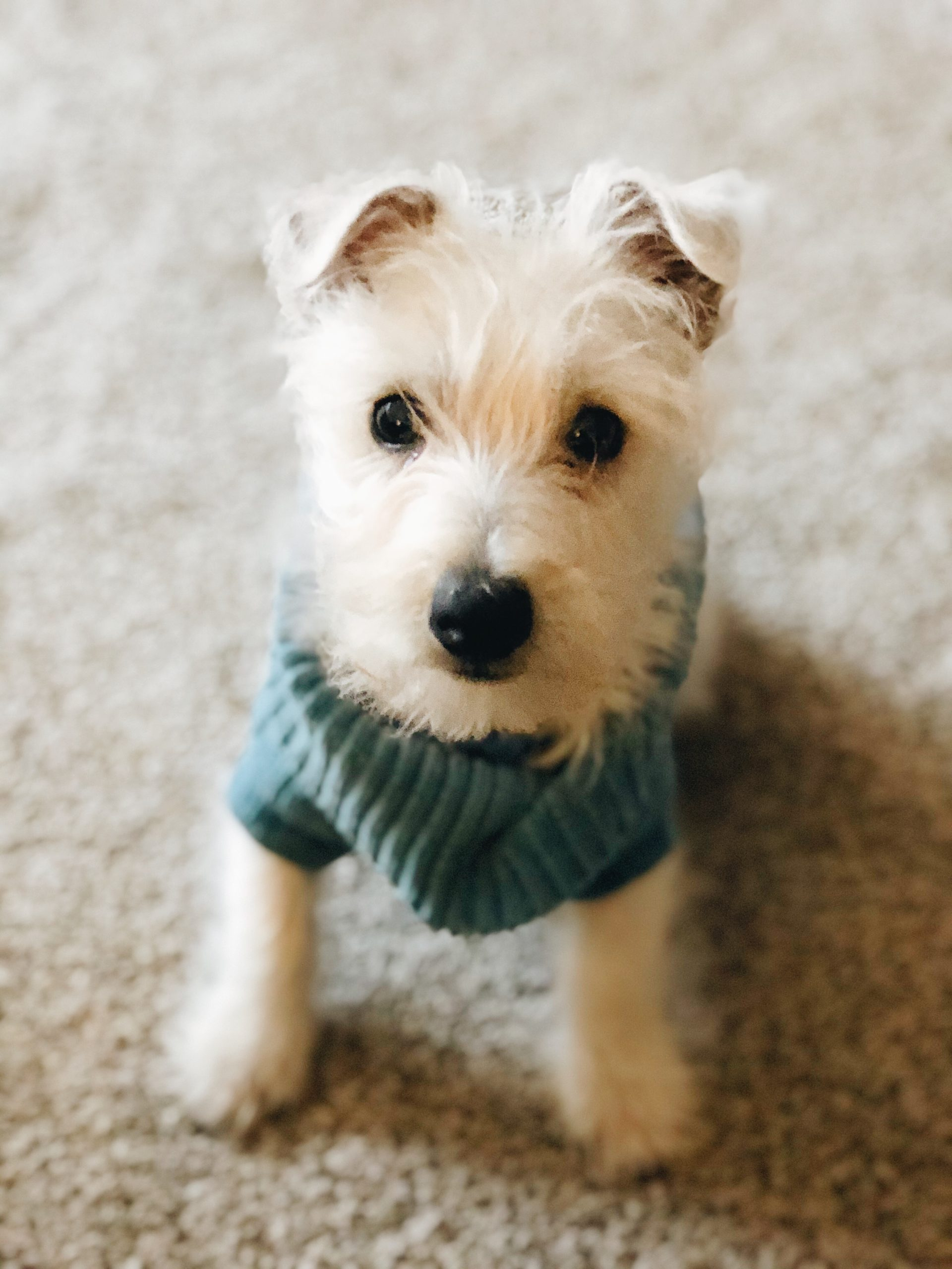 Should I get a puppy? The lessons we learned for getting this sweet pup